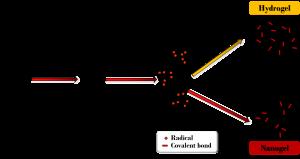 Nanogel Synthesis Mechanism