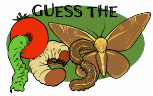 Guess The Pest Logo