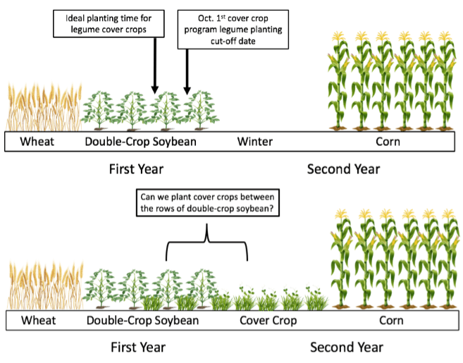Cover Crops Maryland Agronomy News