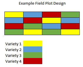 Figure 1. Example field plot design with four varieties replicated four times in a randomized block plot design.