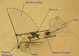 Fig. 1: Avian-based flapping-wing MAV