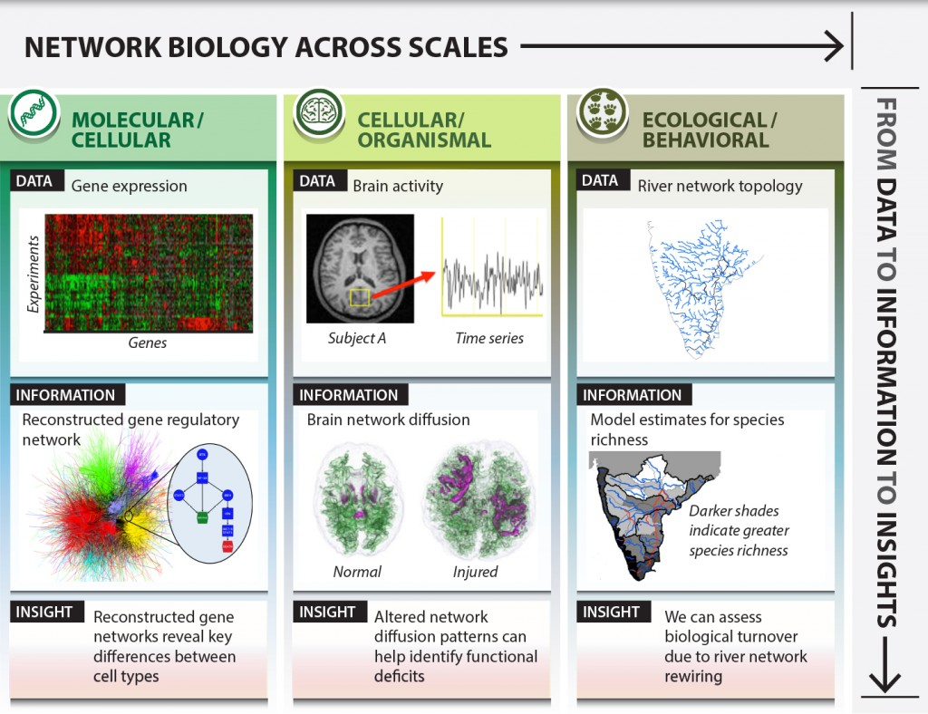 COMBINE applies the methods of network science (developed largely within the physics, applied mathematics, and computer science communities) to the study of biological systems from microscopic to macroscopic scales.