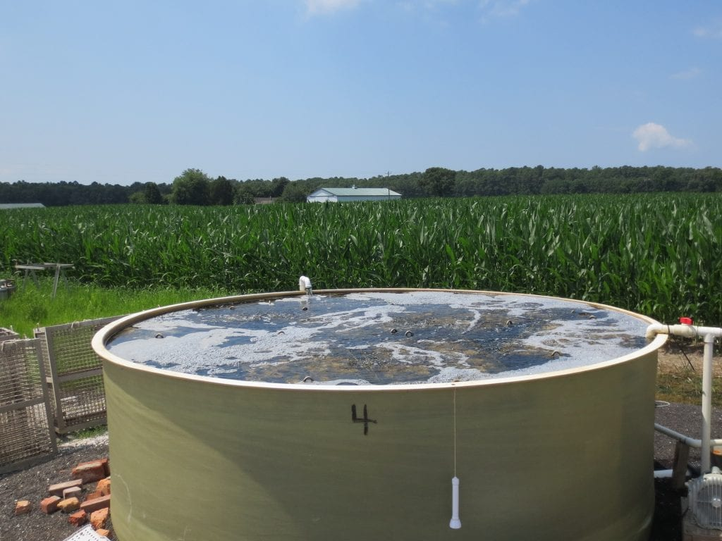 Oyster setting tank in front of corn field as example of livelihood diversification.