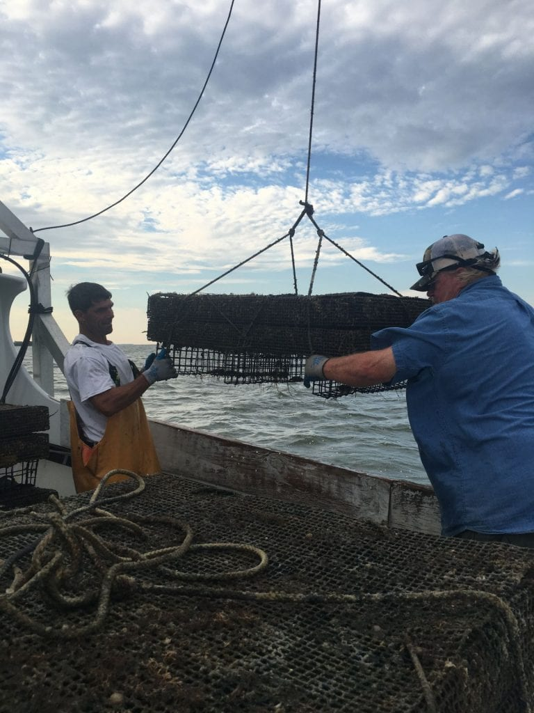 Honga Oyster pulling cages