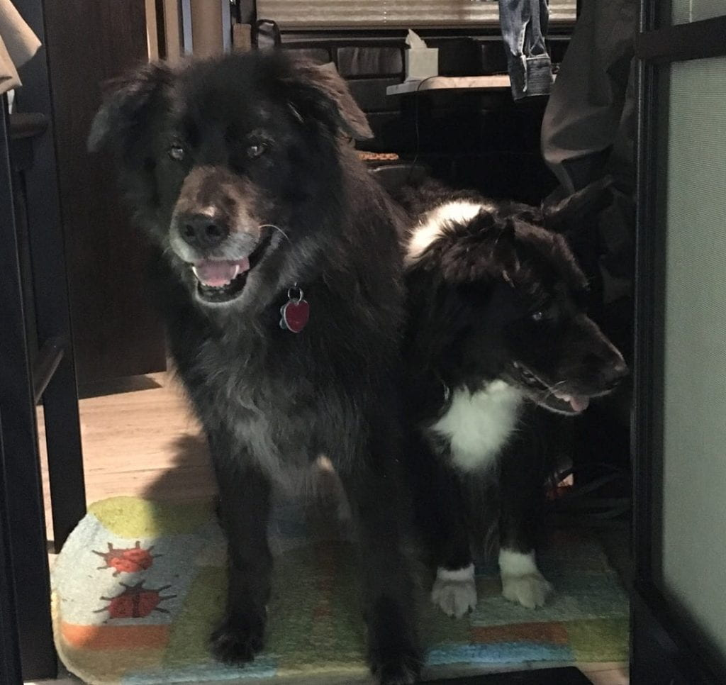 Dogs in trailer door