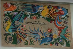 Ornitologia_banner