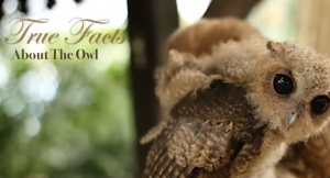 Real_facts_owls