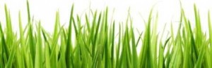 grass_border_3