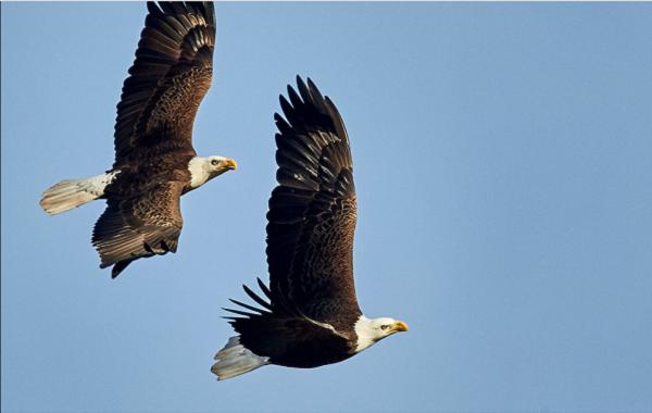 A double eagle?!