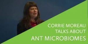 Corrie Monreau Talks about Ant Microbiomes