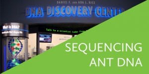 Sequencing Ant DNA