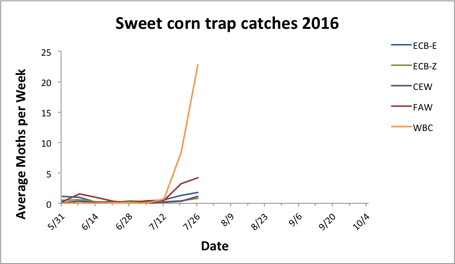 Average sweet corn trap catches for all reporting sites from 5.31.16 - 7.26.16