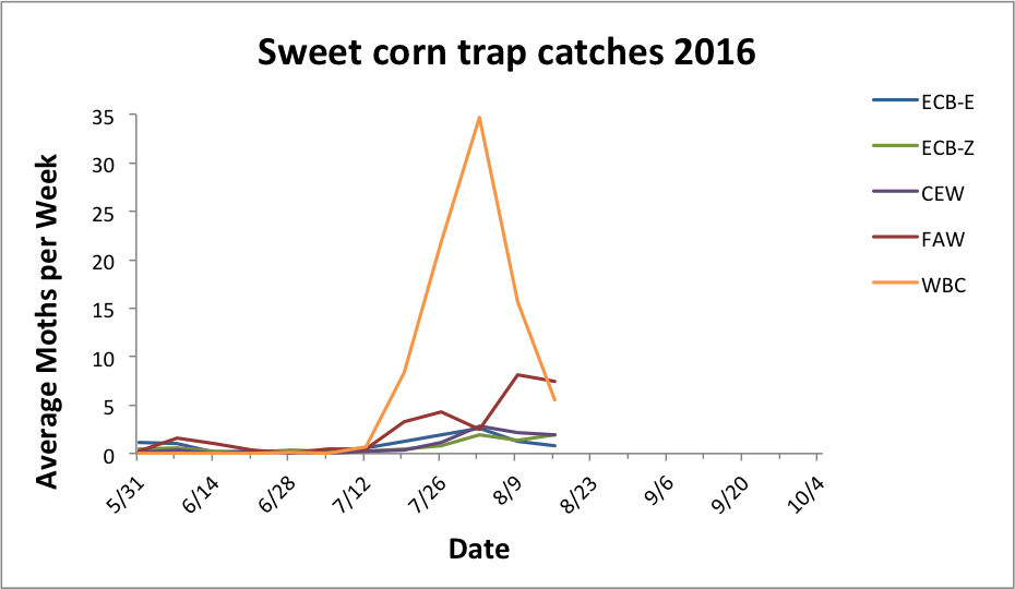 Average sweet corn trap catches for all reporting sites from 5.31.16 - 8.16.16