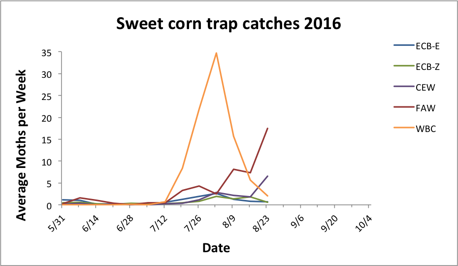 Average sweet corn trap catches for all reporting sites from 5.31.16 - 8.23.16