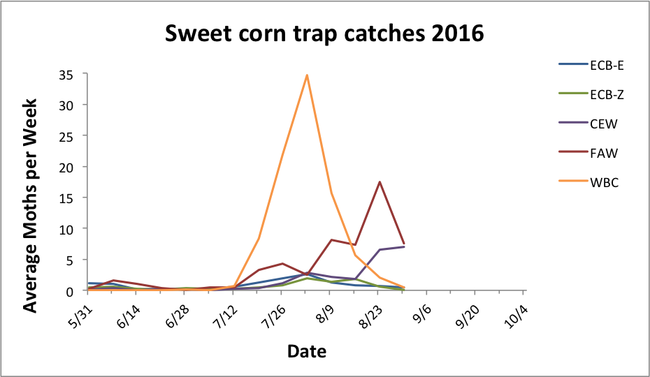 Average sweet corn trap catches for all reporting sites from 5.31.16 - 8.30.16