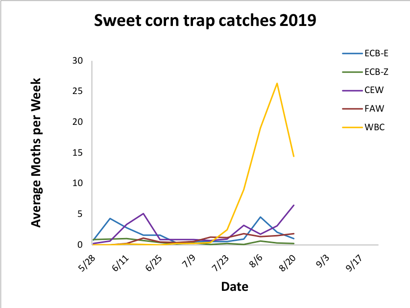 Average sweet corn trap catches from 5.28.19 – 8.20.19.