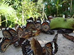 Butterfly centre