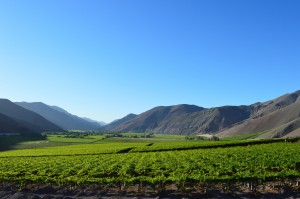 Vineyards in Chile