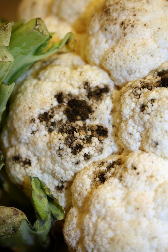 Black specks on cauliflower curd