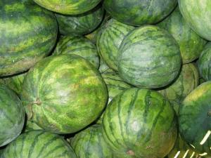 blight symptoms on watermelon