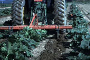 subsoiling between rows