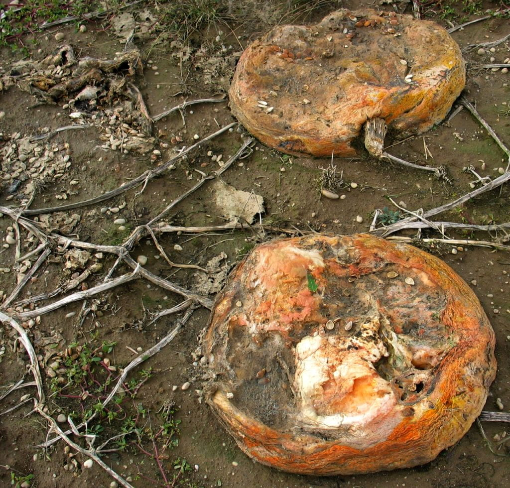 collapsed pumpkins