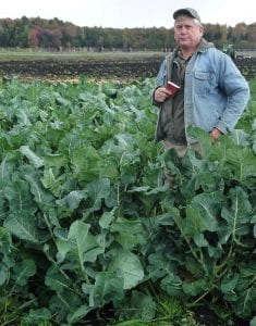 Waist high broccoli in a field with black soil.