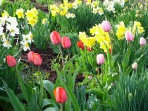 spring bulbs web size file