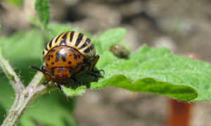 Screen Shot 2014-04-16 at 2.04.46 PM