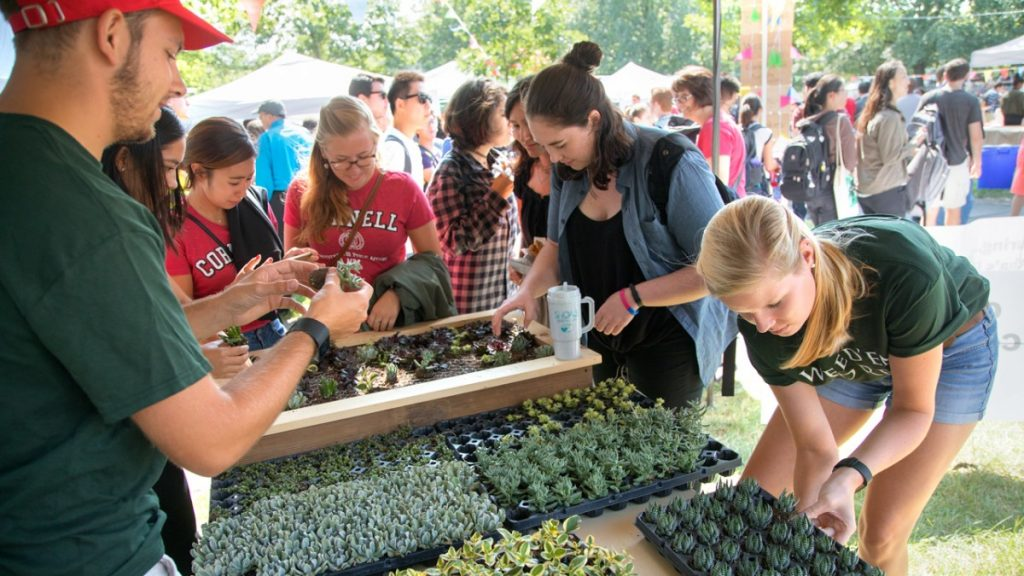 Hortus Forum members Hauk Boyes '18, left, and Maya Gibbs '19, right, help fairgoers place succulent plants into a living mural – that will spell CALS – short for the College of Agriculture and Life Sciences.