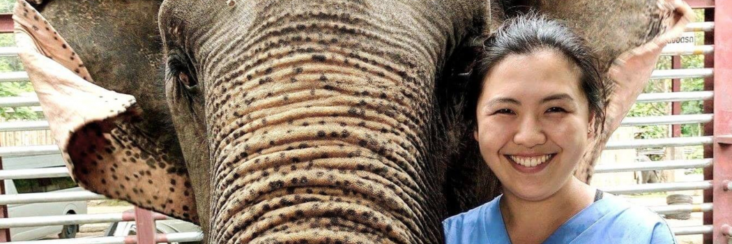 The Elephant Diaries, Part 1: Elvina Yau (2020)