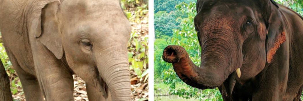 The Elephant Diaries, Part 3: Client Conflict