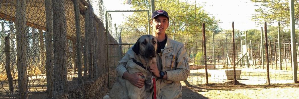 Breeding Livestock Guard Dogs and Protecting Cheetahs