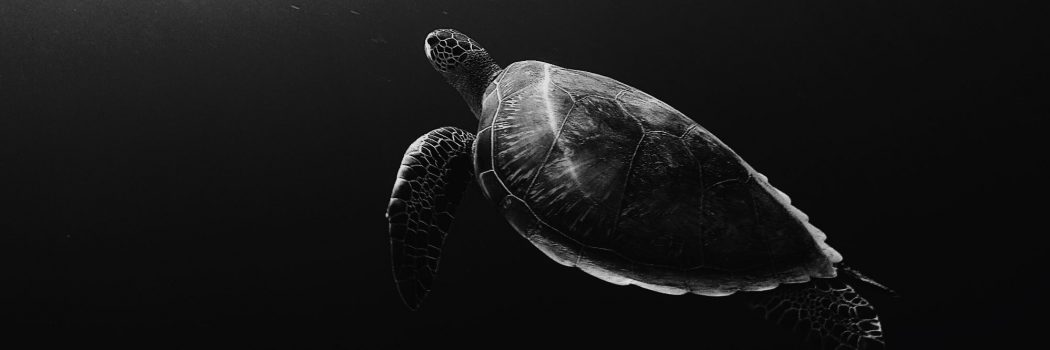 Sea Turtles: An Overview