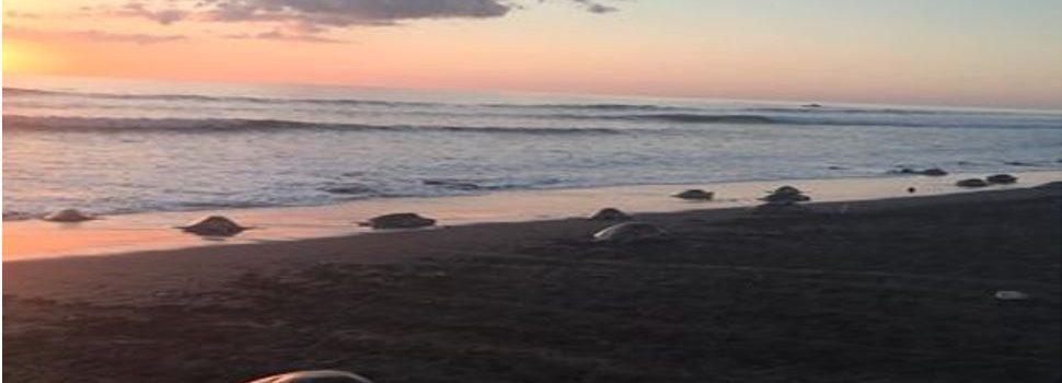 Sea Turtle Conservation in Costa Rica