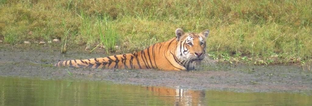 Investigation of Peste des Petits Ruminants Virus in Chitwan, Nepal