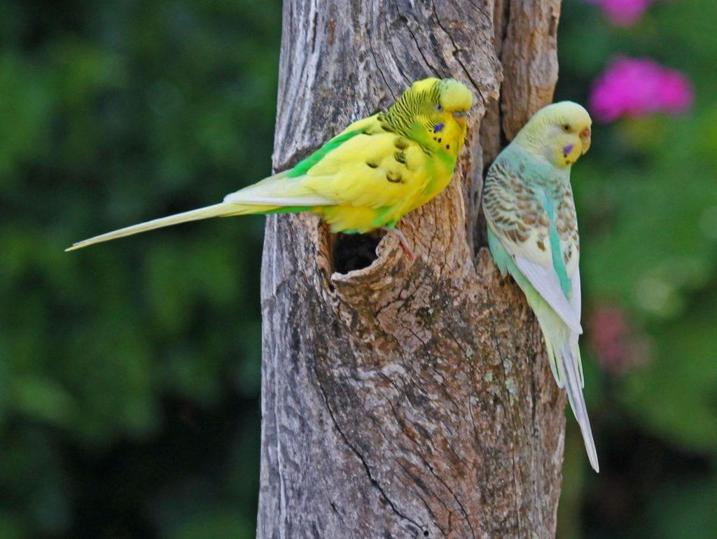 So you want to get a pet bird… – WildLIFE
