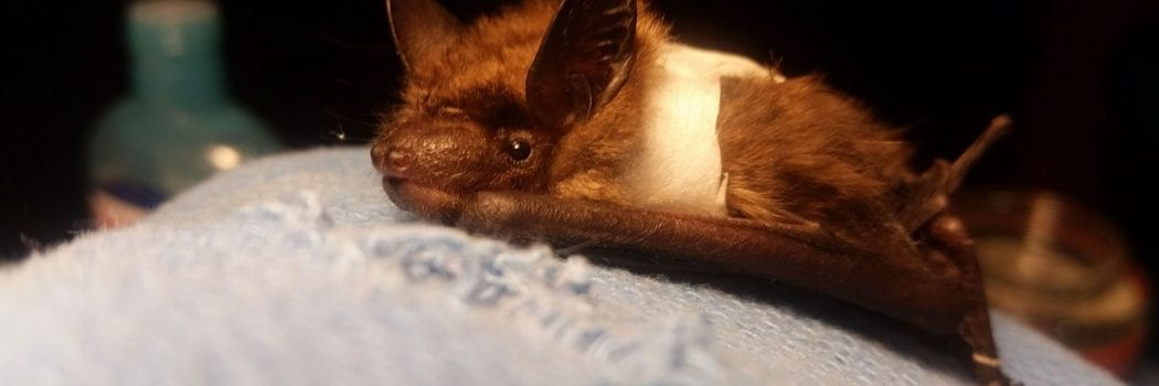 Going Batty: A New Perspective