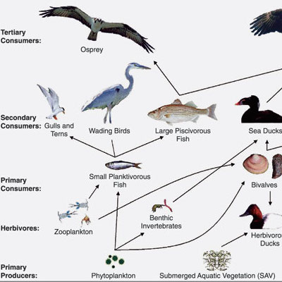 Labs activities cornell institute for biology teachers food chain game delta education ibookread PDF