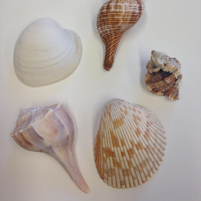 Mollusk Dichotomous Key Thumbnail