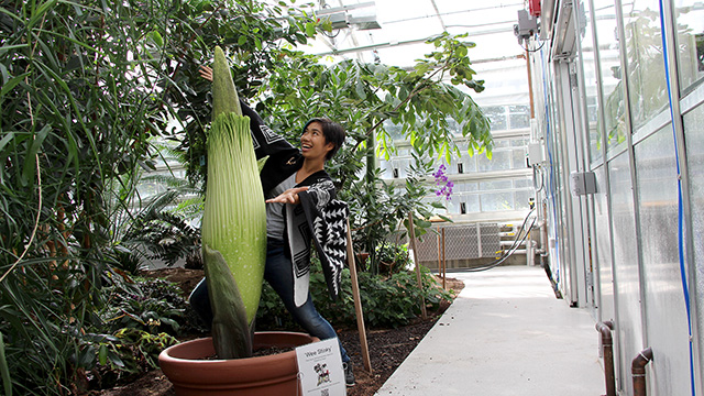 Plant Sciences major Patty Chan '18 welcomes 'Wee Stinky' to the new Liberty Hyde Bailey Conservatory.