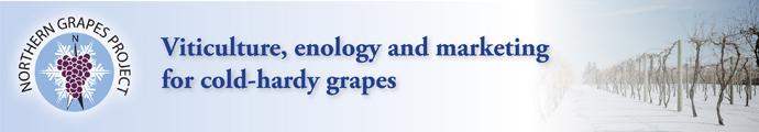 Northern Grape 690