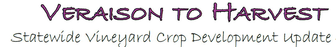 Veraison to harvest logo