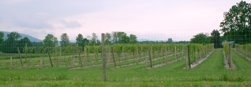 Willsboro 2009