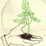 Sowing_the_Seeds