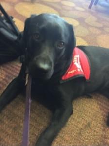 Tessa, a guide dog