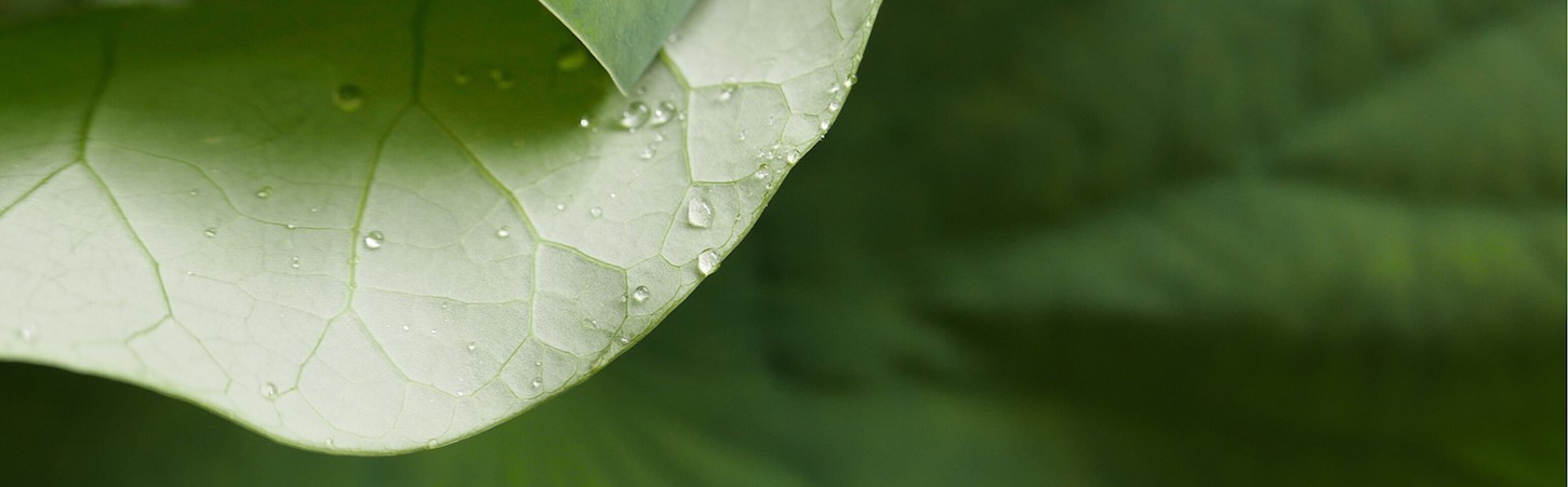 Photo of a green leaf with droplets of water on it