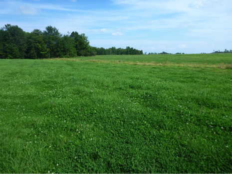 A well-managed Northern New York pasture.  (Photo: K. O'Neil, August 2013)