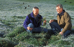 NNYADP-funded research by Cornell University is evaluating winter-hardy grass-alfalfa crop combinations in support of the dairy industry. In this photo, USDA researchers examine frost-stressed forage in West Virginia, 500 miles south of New York's harsher northern winters. Photo: Peggy Greb, USDA