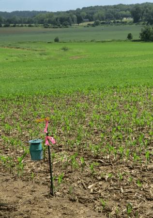 Green bucket trap